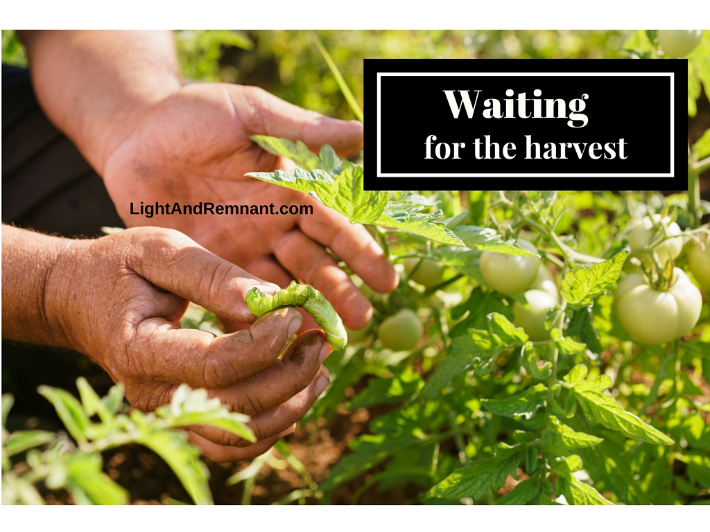 Waiting for the Harvest